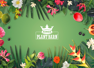 kings plant barn cover